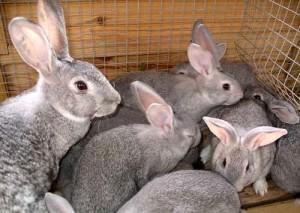 Мини-ферма по выращиванию кроликов